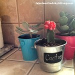 Creating upcycled succulent flower pots to display in the Kitchen