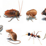 Is it safe for your children to be in the house when pest control is taking place?