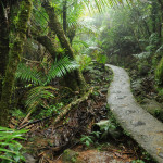 El Yunque Tours to See Puerto Rico Like Never Before
