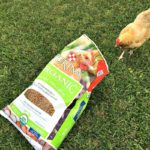 Use Purina Organic Poultry Feed For Nutritious Egg Production