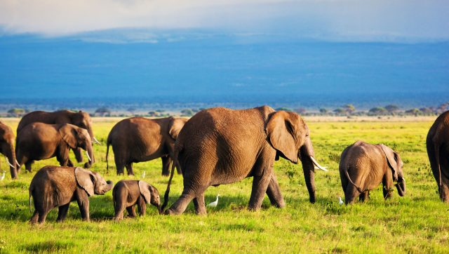 African Safari: Planning the Trip of a Lifetime