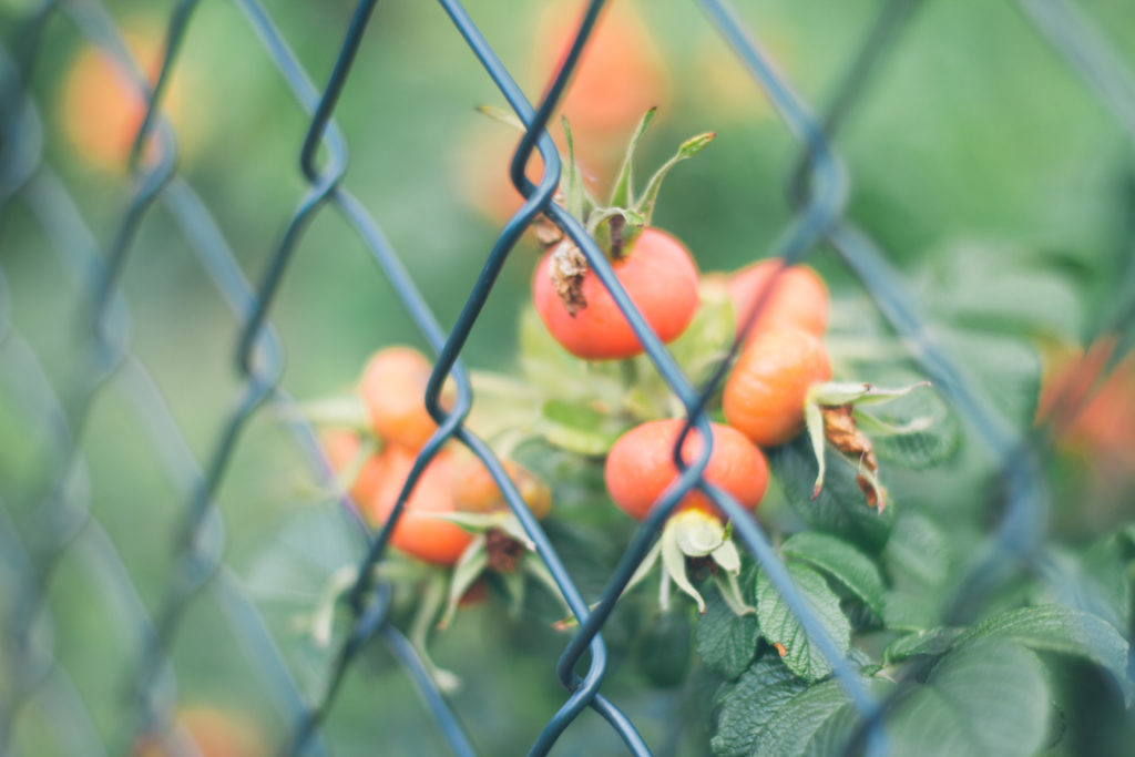 keep your garden secured against thieves and trespassers