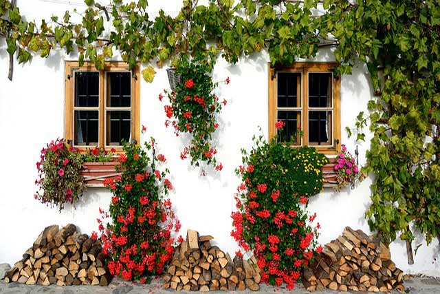home-front-flowers